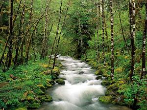 Un riachuelo en medio del bosque que nos da frescor y aliento para seguir el camino.