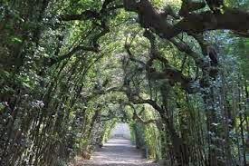 Criannax on the road day and night i giardini di boboli relax immerso nella bellezza - I giardini di boboli ...