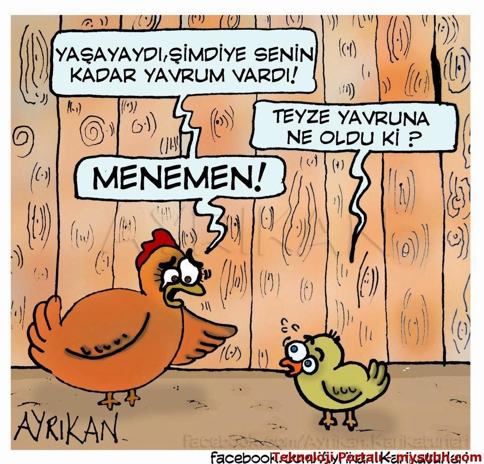 Tavuk Karikaturu