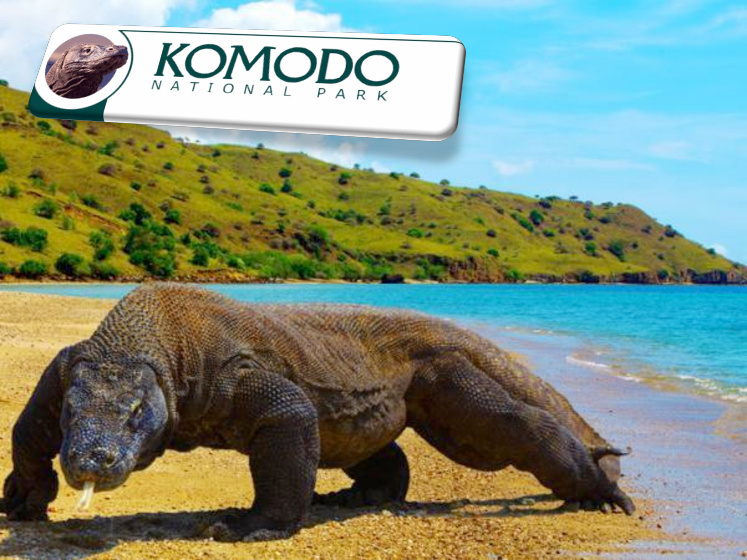 komodo national park natural creations. Black Bedroom Furniture Sets. Home Design Ideas