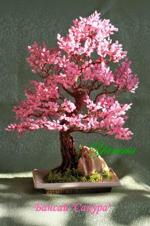 Дерево бонсай сакура пошаговое фото