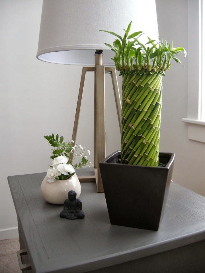 lucky bamboo pillar