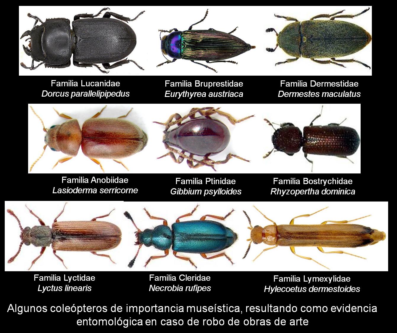 ... de seguro social imprimir codigo de seguridad nombres de insectos