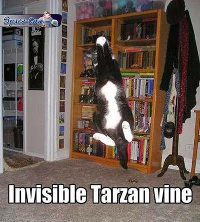 funny animals cats humor
