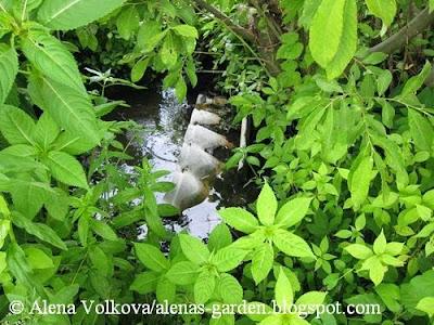 ручей, колодец, сорняки, сныть, вьюнок, Аленин сад, часть 1, целина, участок до, освоение участка