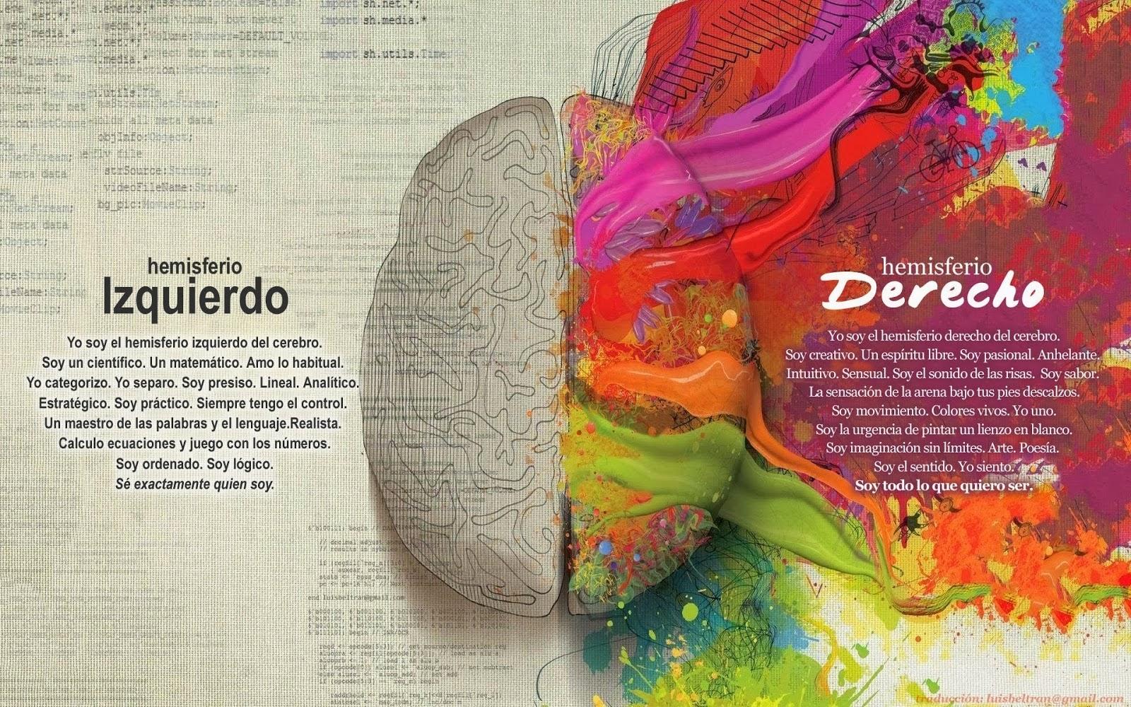 Lámina del cerebro representando ambos hemisferios y sus caracteristicas. Hemisferio derecho de múltiples colores.