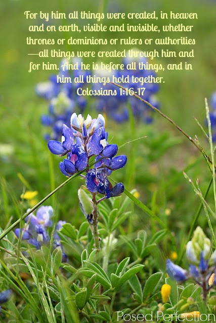 Bluebonnet with Colossians 1:16-17