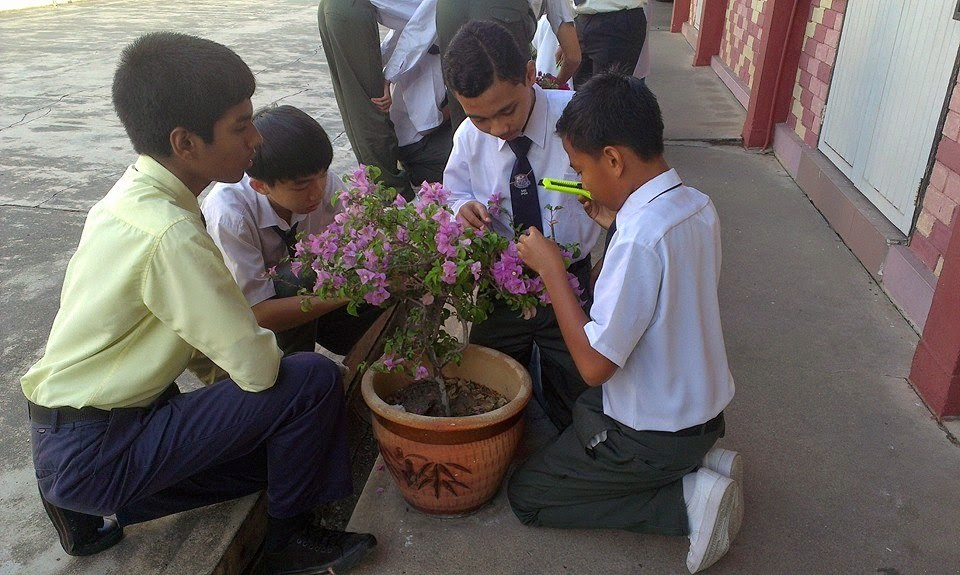 Idea P&P Sains : Mengkaji Floem Dalam Tumbuhan