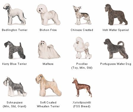 Pet Info.: Which dog breed to choose?
