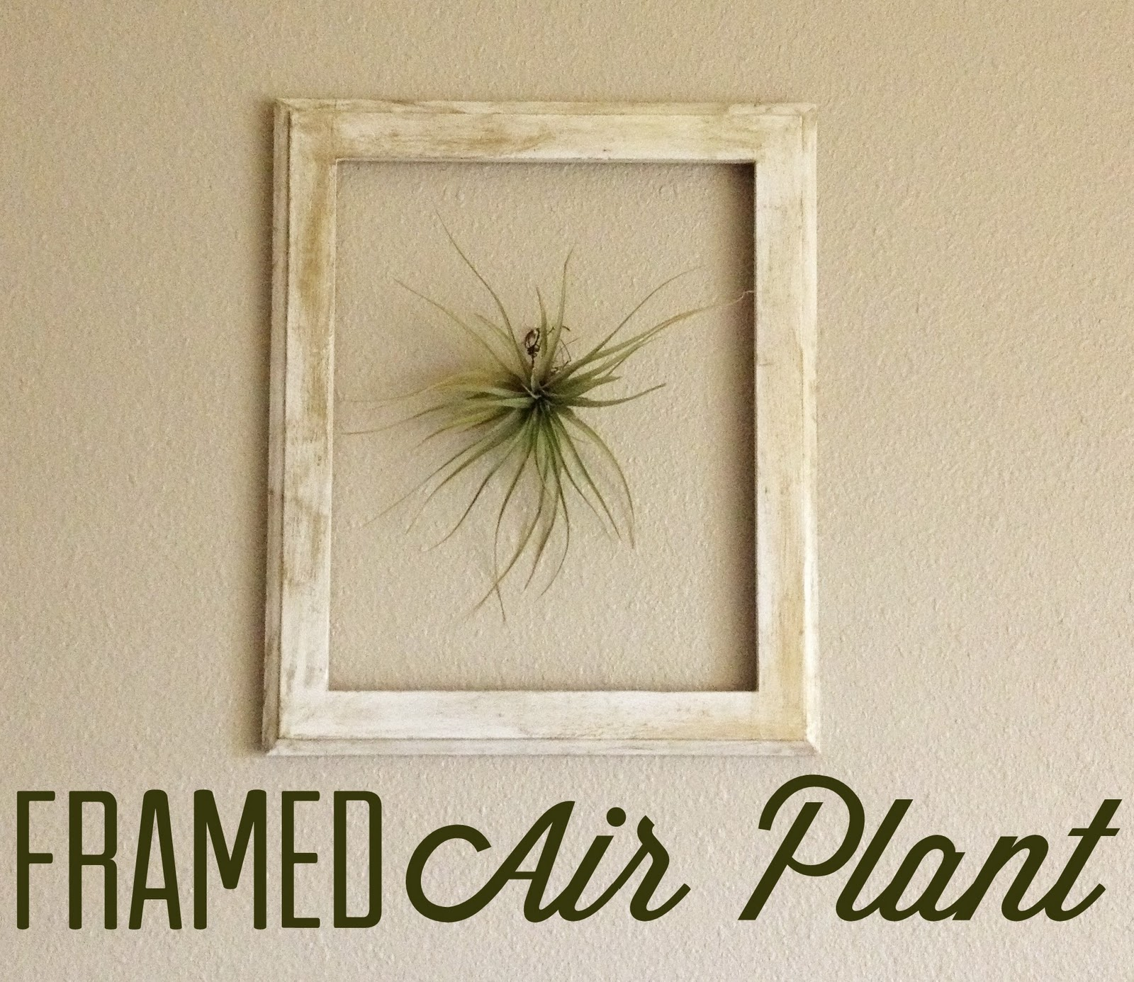 Project 3: Framed Air Plant - Campfire Chic