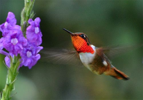 Ideas And Inspiration For Creative Living Hummingbirds