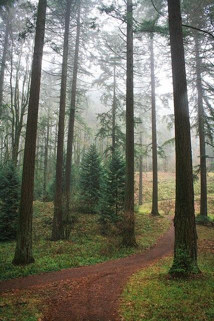 Forest Park, Portland