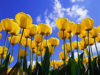 Cara Menjadikan Blog Lebih Wangi dengan Ditumbuhi Bunga