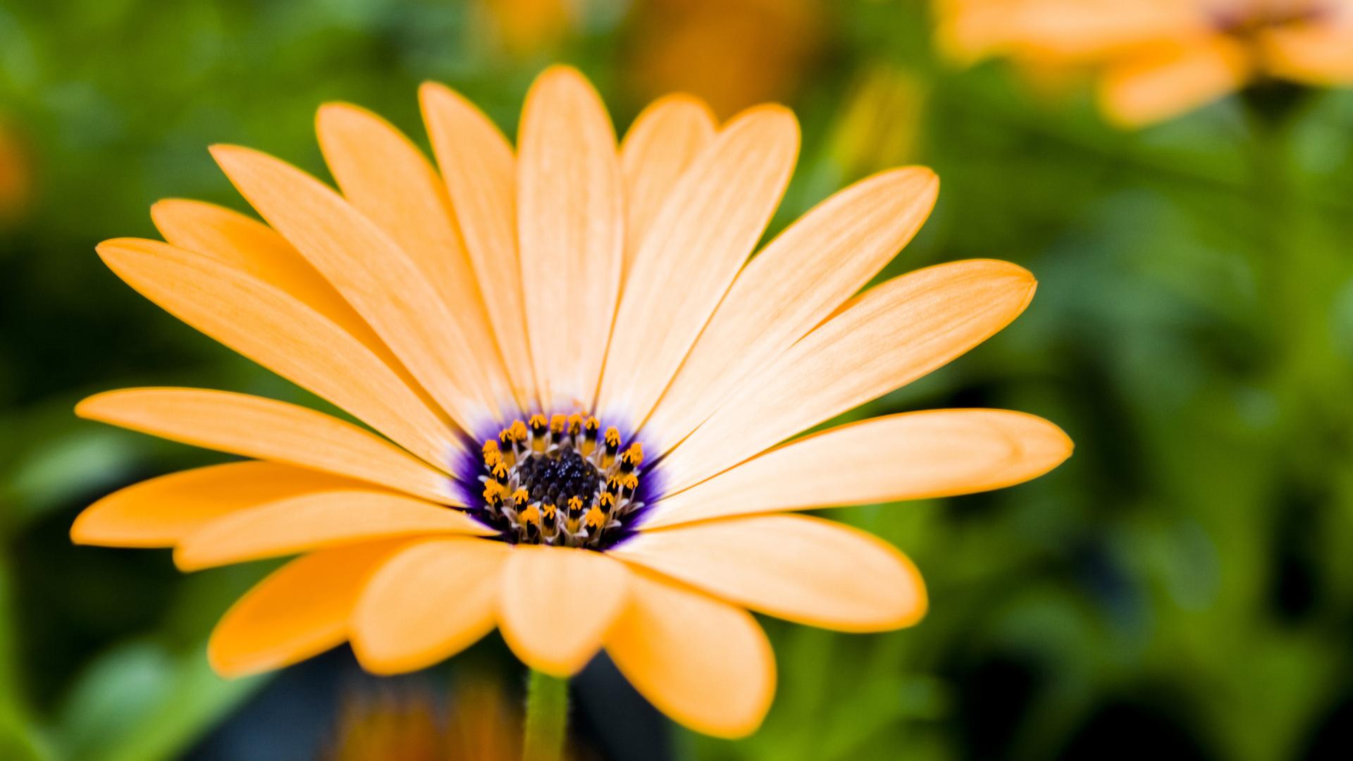 Flowers HD Widescreen Wallpaper