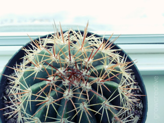 cactus house plant