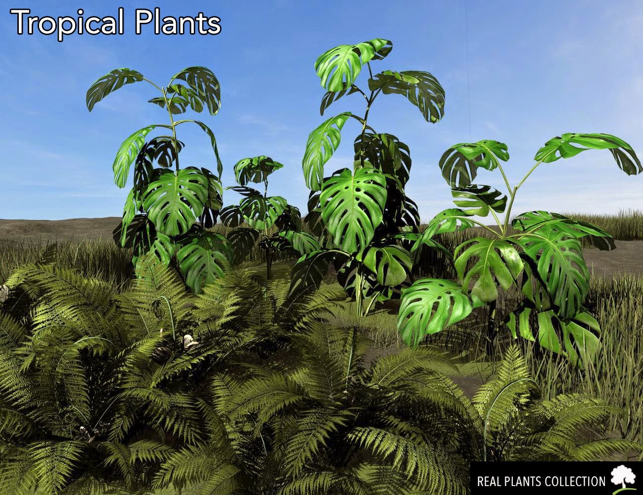 RPC Volume 3: Plantes tropicales