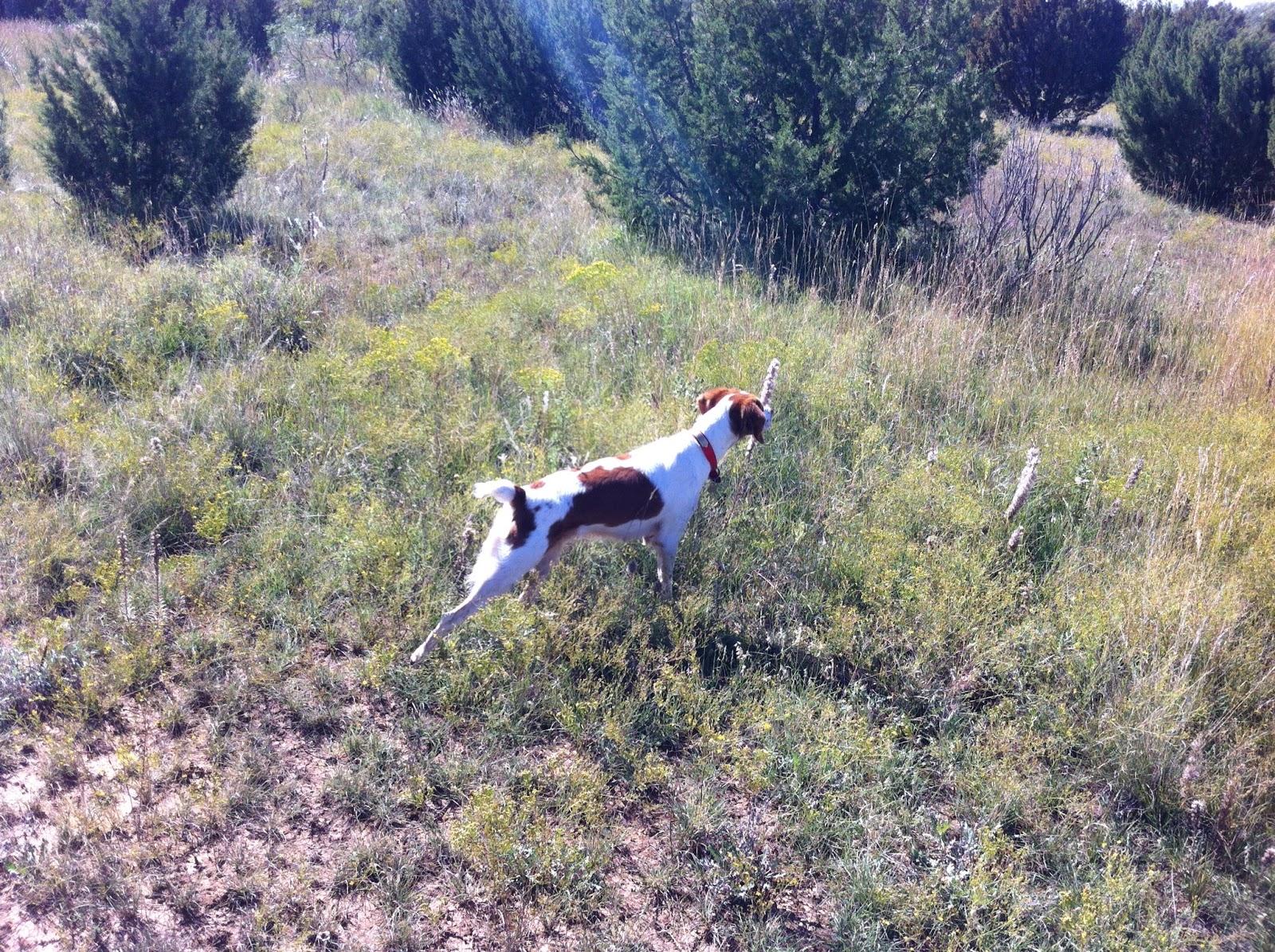 How Do I Train My Dog To Bird Hunt