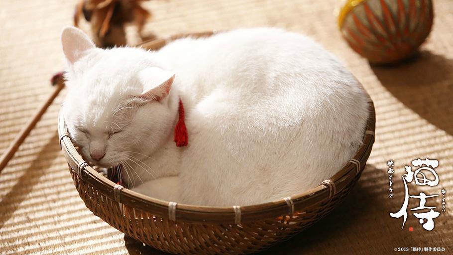 猫侍(ねこざむらい)