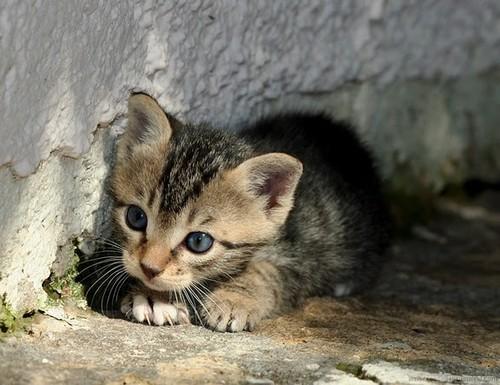 cat bed outdoor