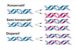 Macam Macam Replikasi DNA
