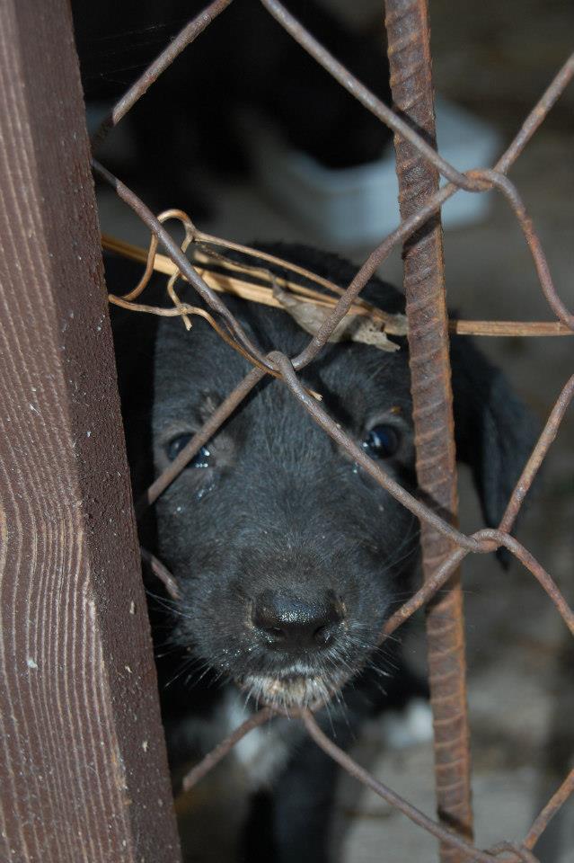 A sorsárahagytott kutyaalom minden tagja gazdához került