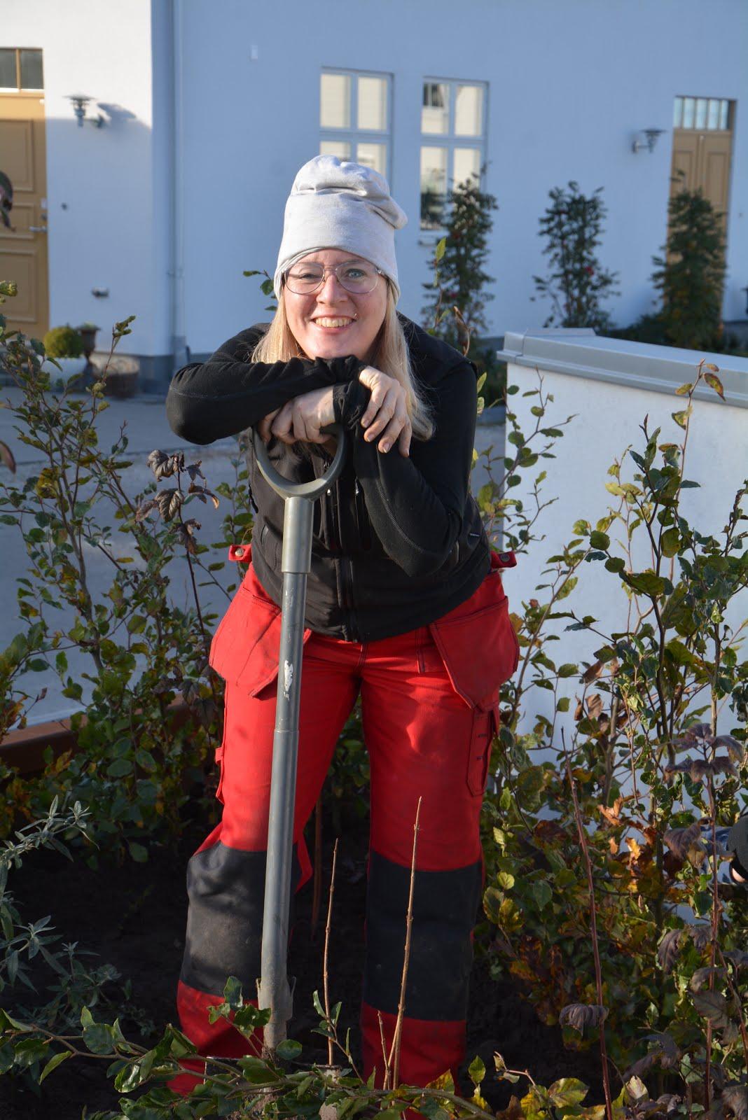 Så planterar du en barrotad Avenbok-/Bokhäck