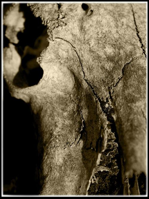Psynopsis Skull