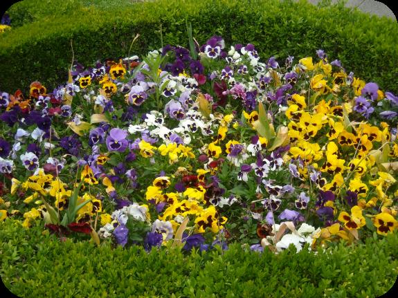 Fotos de jardines con flores y piedras for Fotos de jardines