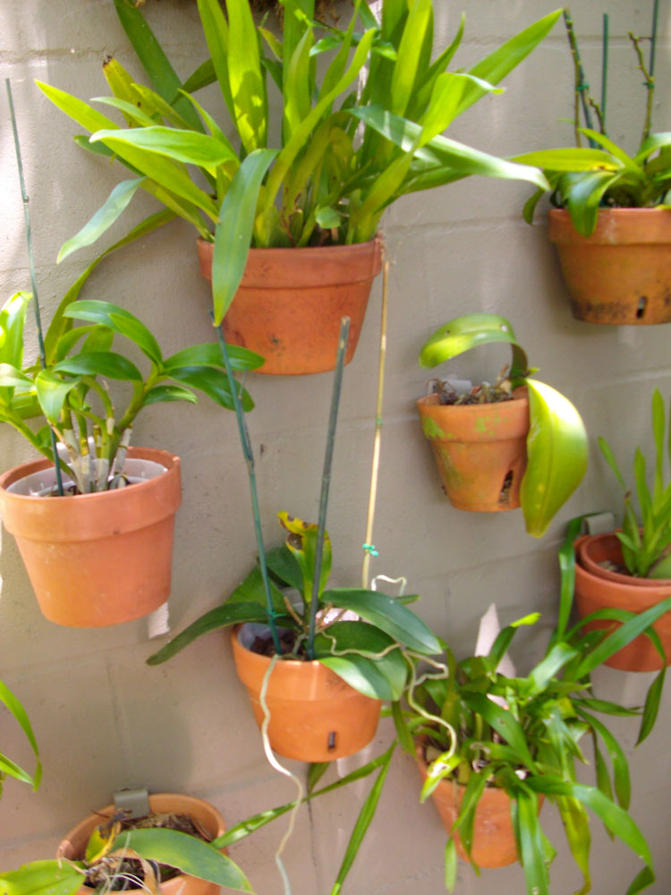 The Rainforest Garden Off The Wall Ideas For Orchids On