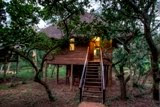 Zululand Tree Lodge Rooms