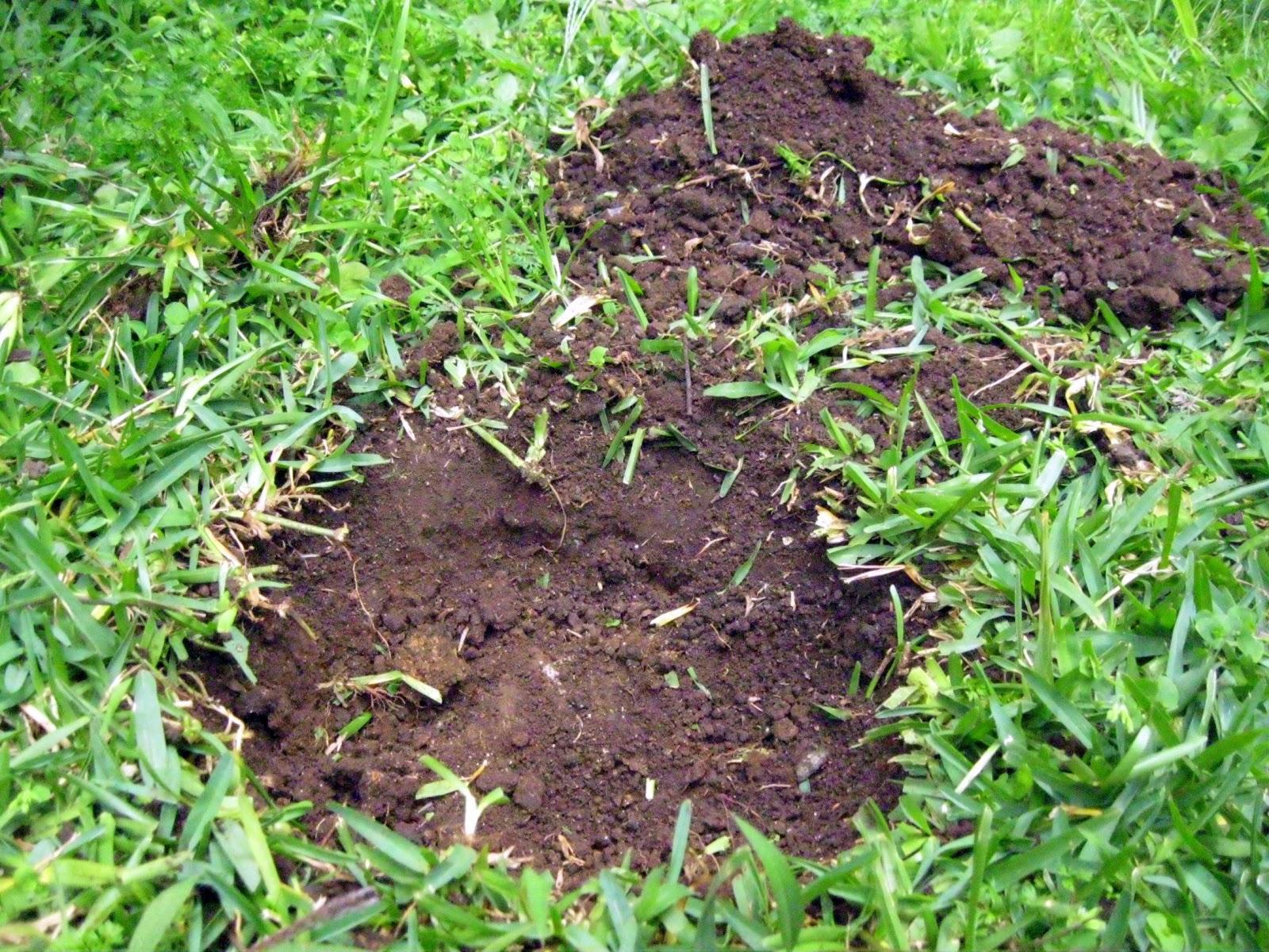 Andre plant a tree for Zacate de invierno