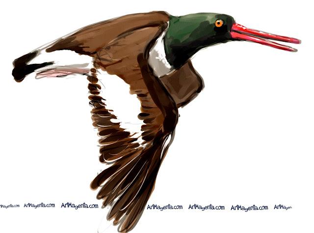 American Oystercatcher sketch painting. Bird art drawing by illustrator Artmagenta.