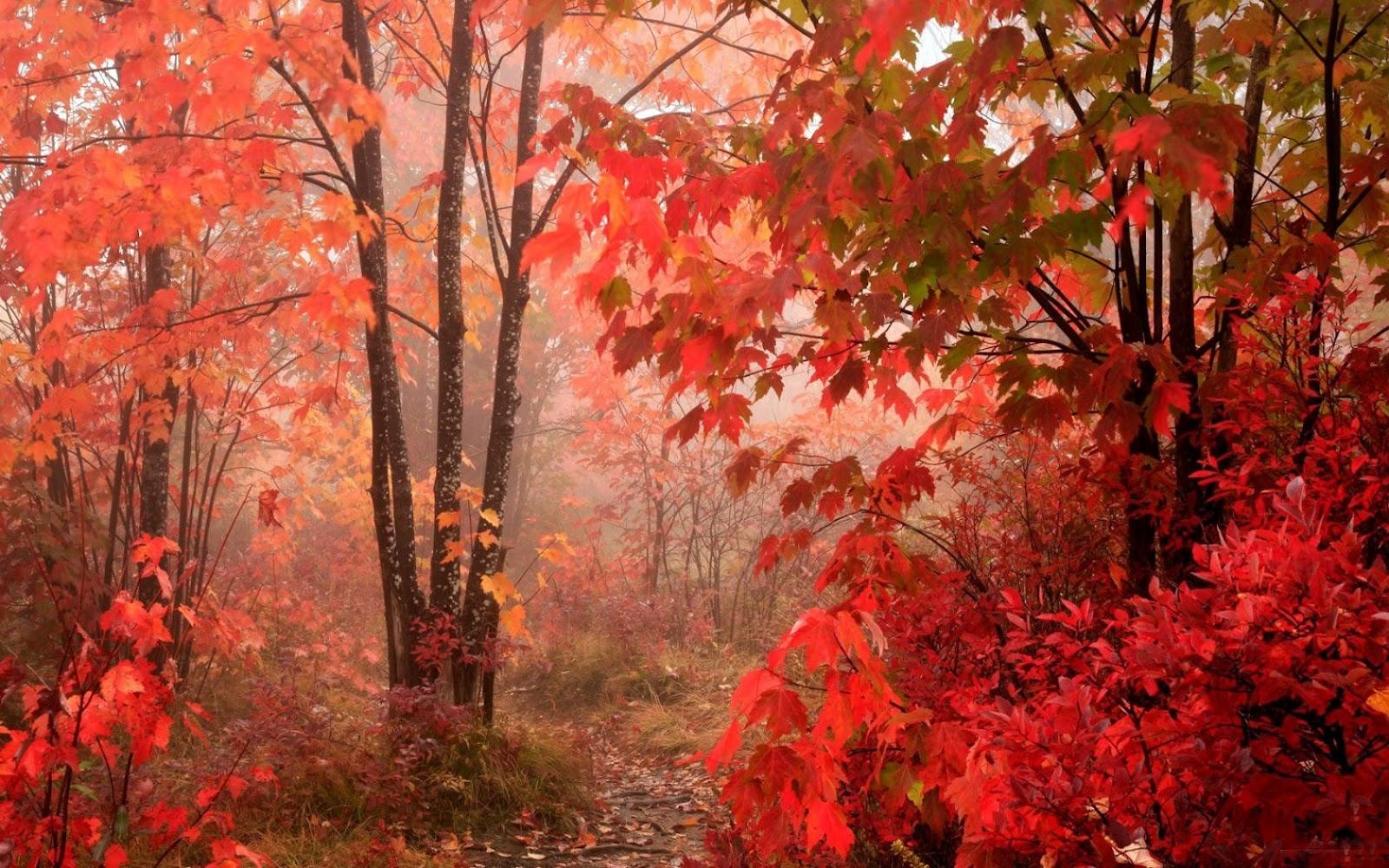 follaje otoño