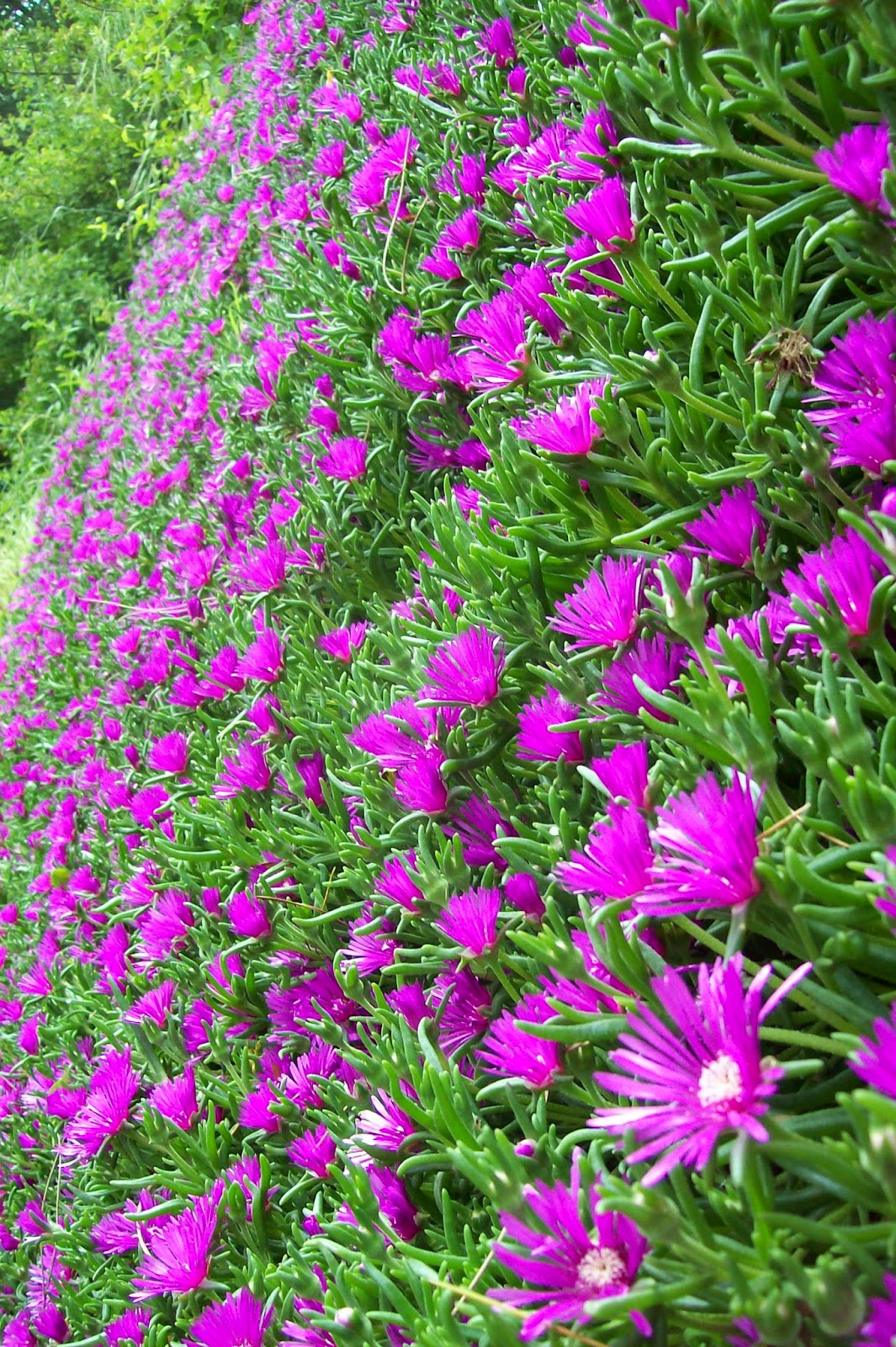 Ultimissime dall 39 orto muro fiorito - Palizzate per giardino ...