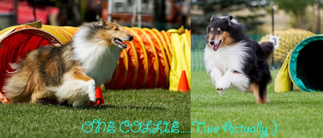 One Collie...Two Actually :)