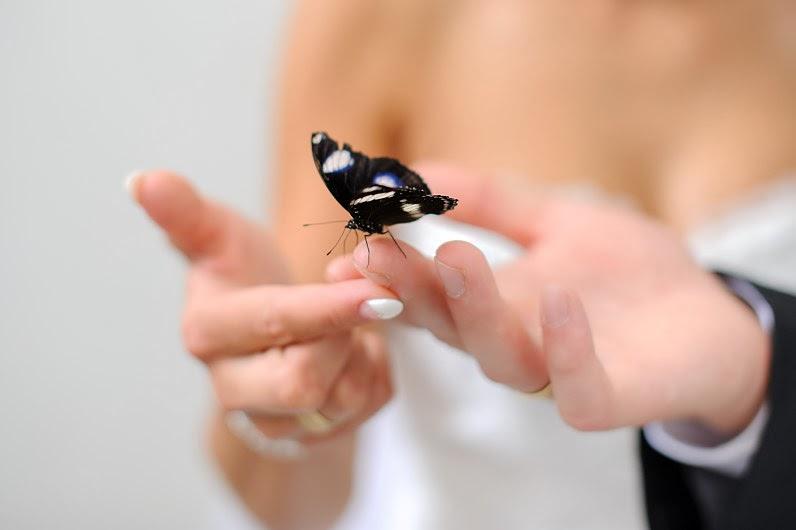 vestuviniai drugeliai panevėžyje