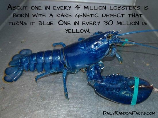 animal facts, facts about animals, interesting animal facts, lobsters fact