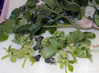 Alexanders flowers and dandelion flower buds ready to be cooked in the stir-fry