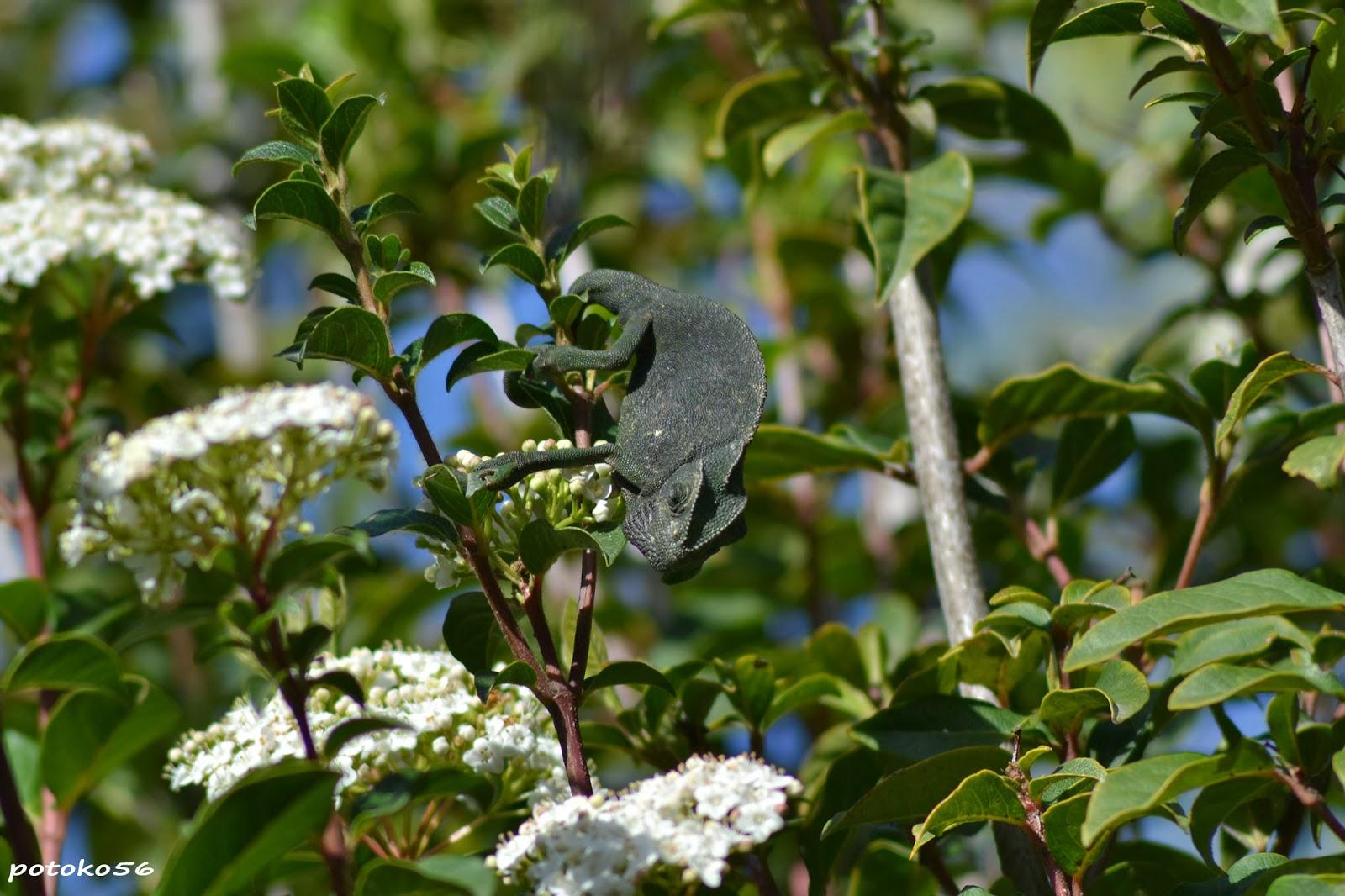 Camaleones Roteños Parque Botánico Celestino Mutis Rota