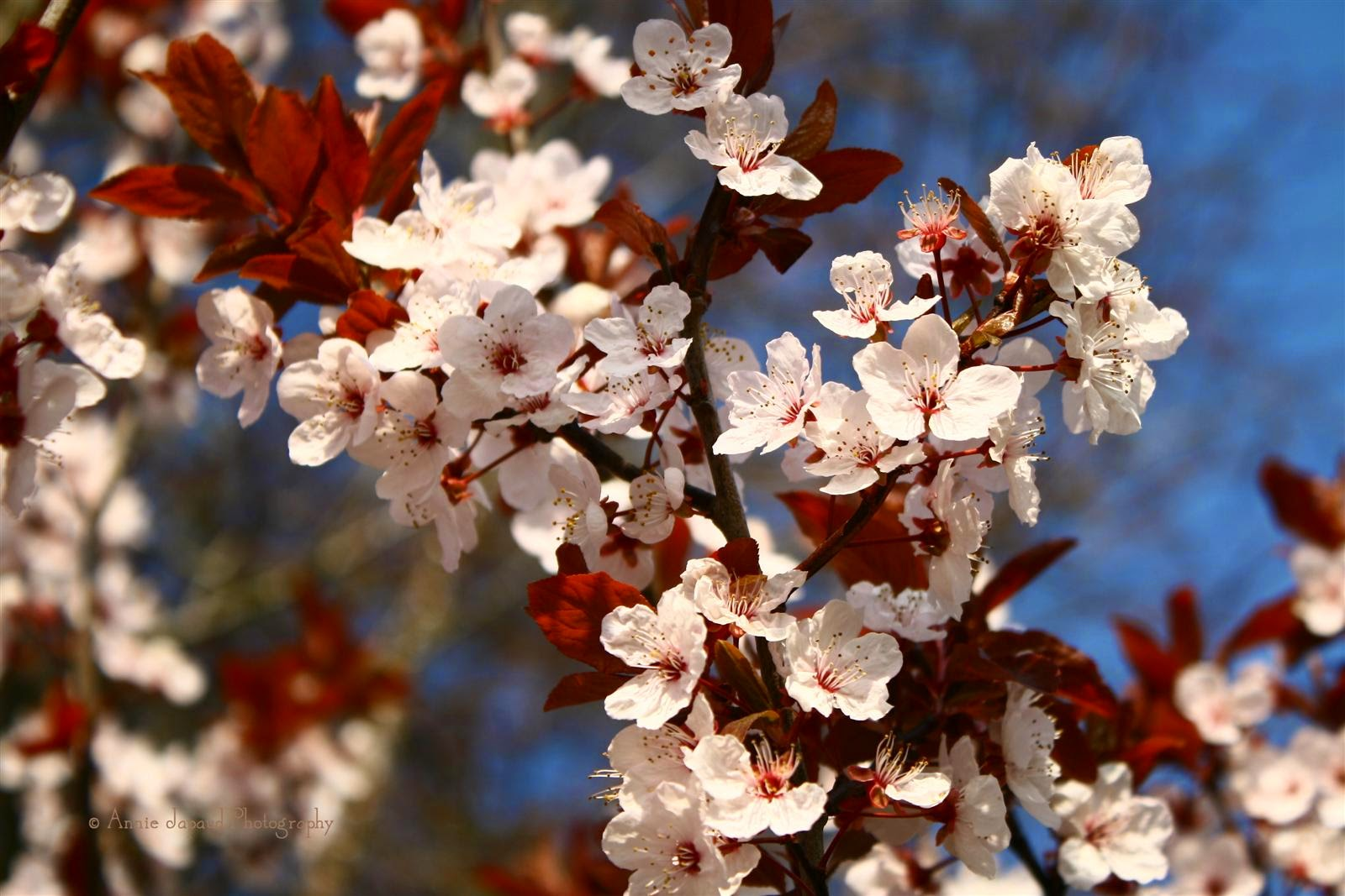 image of a branch covered in lovely spring blossoms