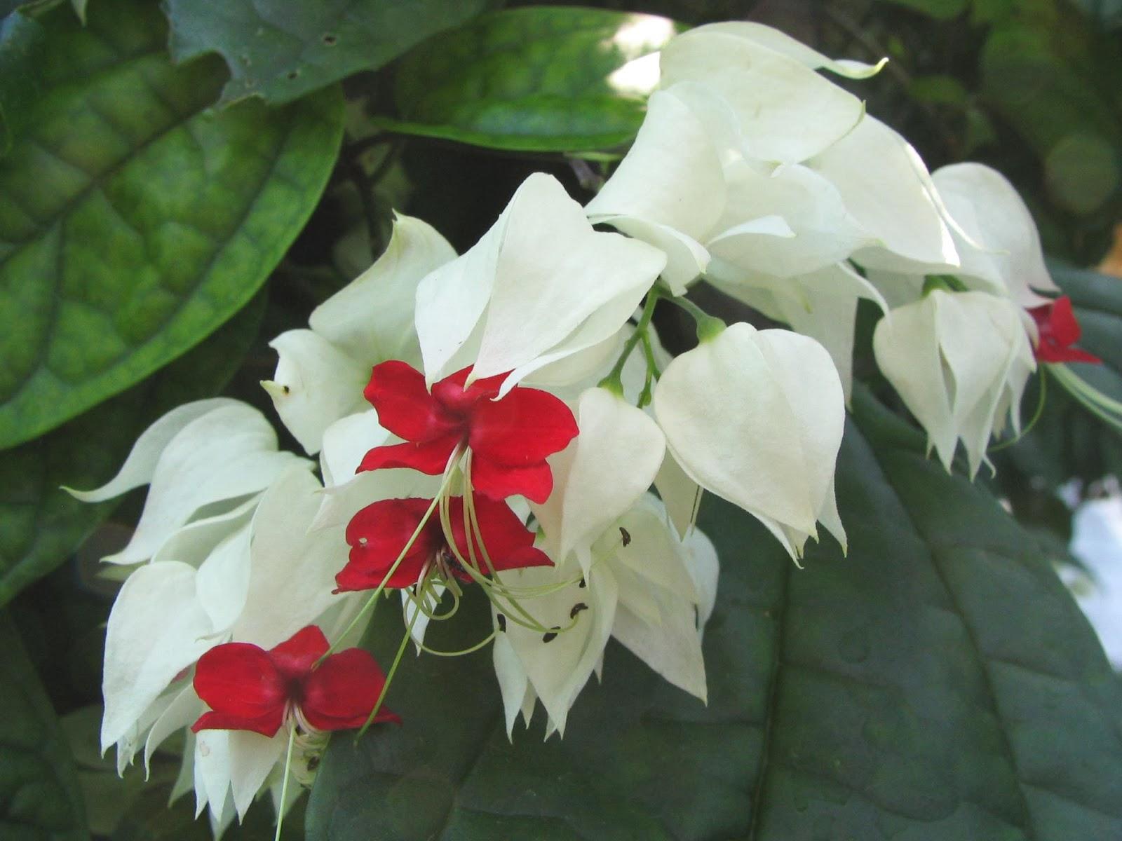 Trepadoras colecci n de hojas y flores - Arbustos perennes con flor ...