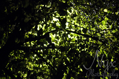 Leaves by streetlight, Cheltenham