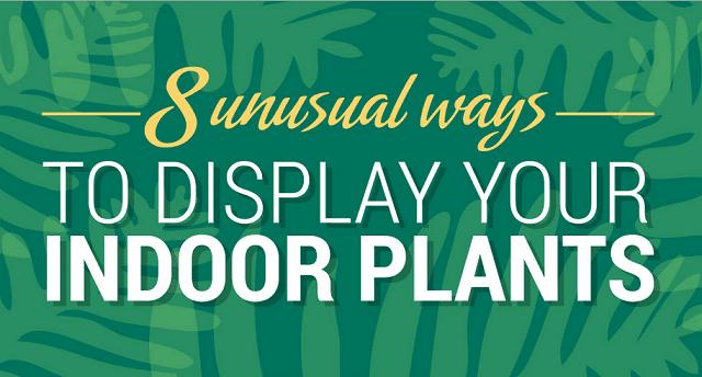 8 Unusual Ways to Display Indoor Plants