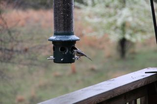 photo of bird feeder in the rain