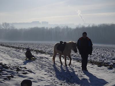 konie, kucyki, jazda konna, jazda na sankach, kulig, oprzęganie koni, zima w mieście