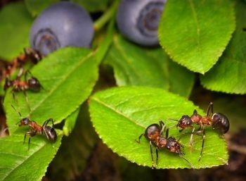 Natural ways to get rid of ants in the yard