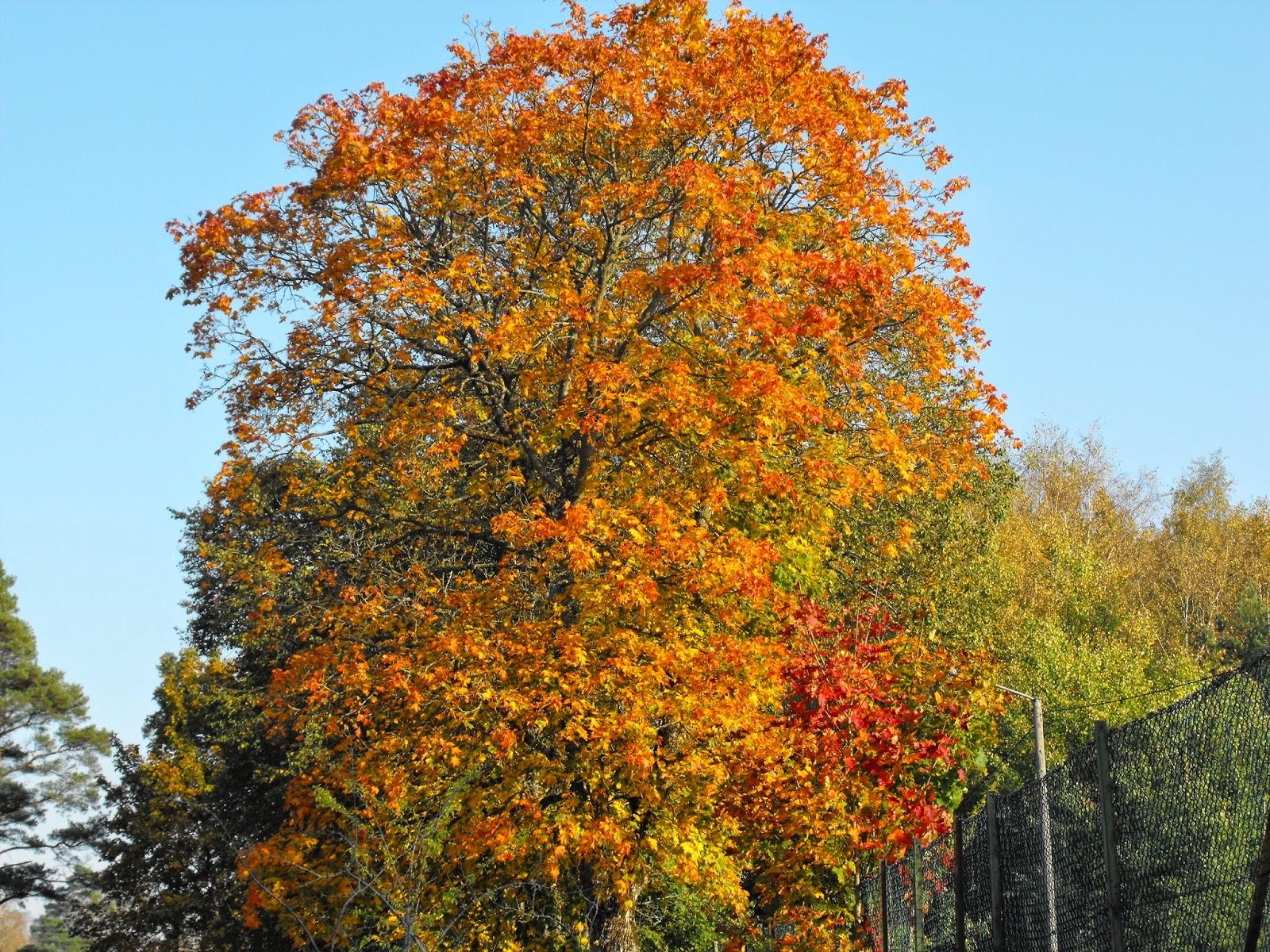 promenad, höst, autum, Sösdala, Hässleholm, landet, Hässleholms kommun, Sosdala, vacker natur