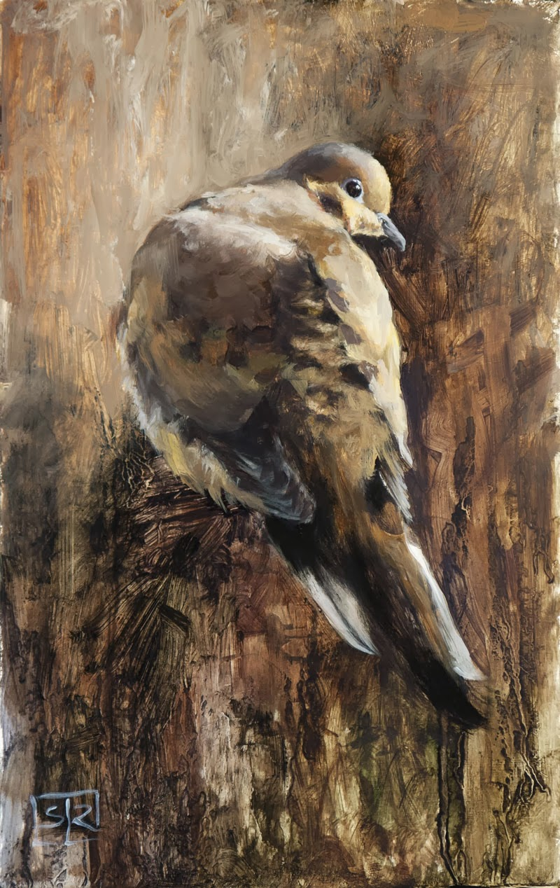 You lookin at me? (mourning dove),  oil on panel, by Shannon Reynolds