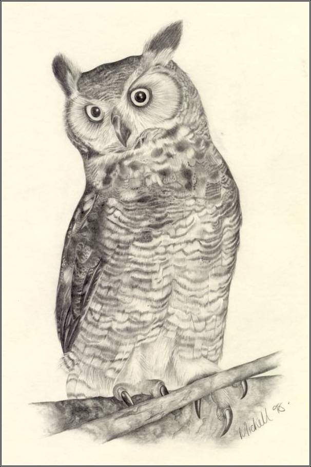 Owl Drawing 3d Drawing