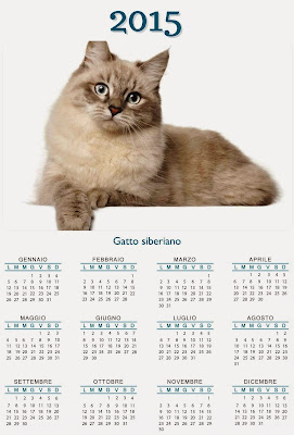 calendario gatto siberiano